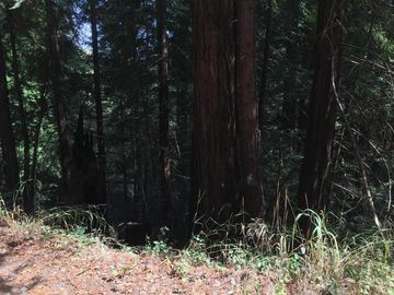 Redwood Dr Felton CA. Photo 1 of 4