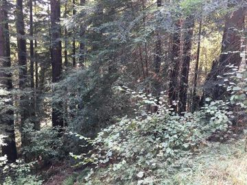 Redwood Dr Felton CA. Photo 3 of 4