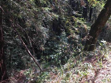 Redwood Dr Felton CA. Photo 4 of 4