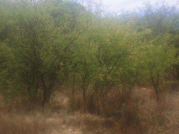 5395 N Barbara Ln, Under 5 Acres, AZ